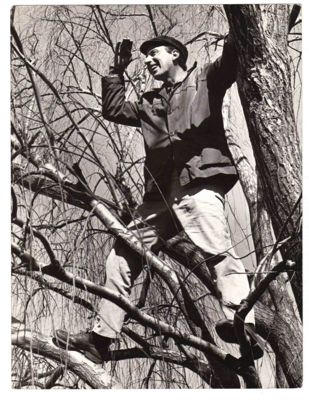 Haroldo Conti y el árbol